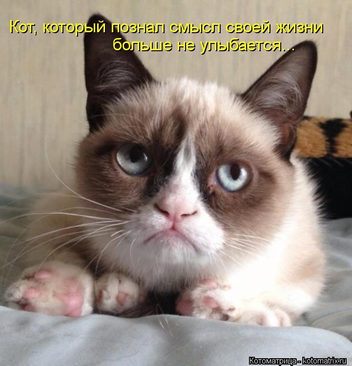 Котоматрица: Кот, который познал смысл своей жизни больше не улыбается...