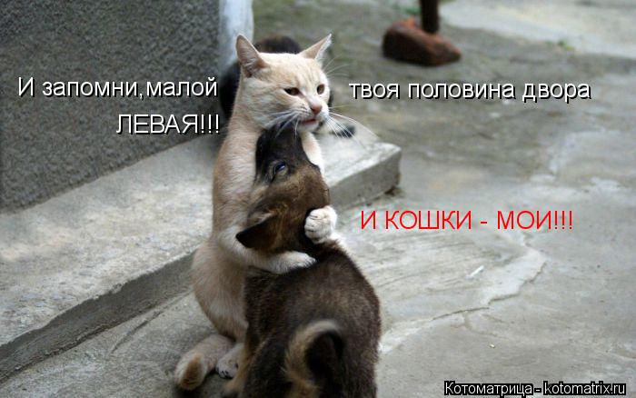 Котоматрица: И запомни,малой  твоя половина двора ЛЕВАЯ!!! И КОШКИ - МОИ!!!