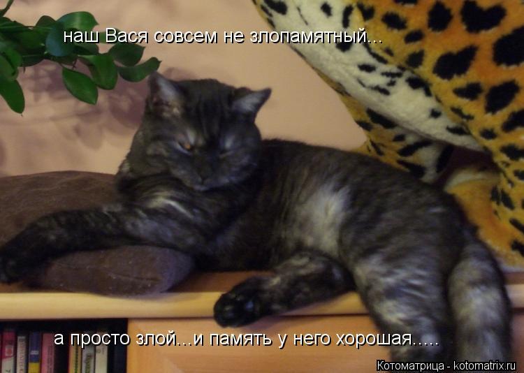 Котоматрица: наш Вася совсем не злопамятный... а просто злой...и память у него хорошая.....