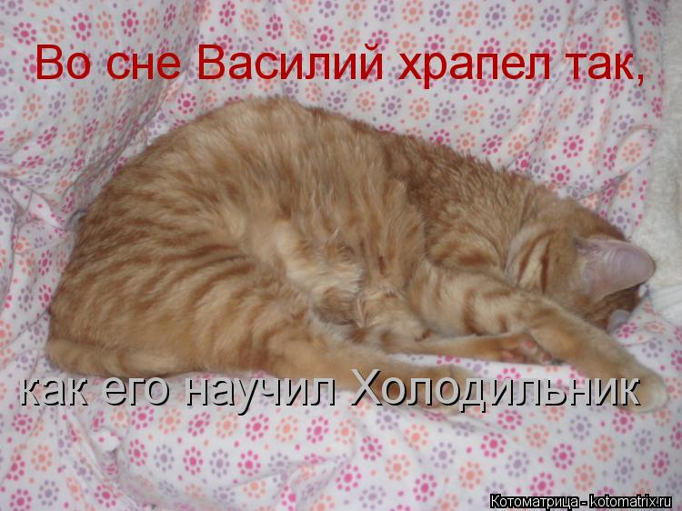 Котоматрица: Во сне Василий храпел так, как его научил Холодильник