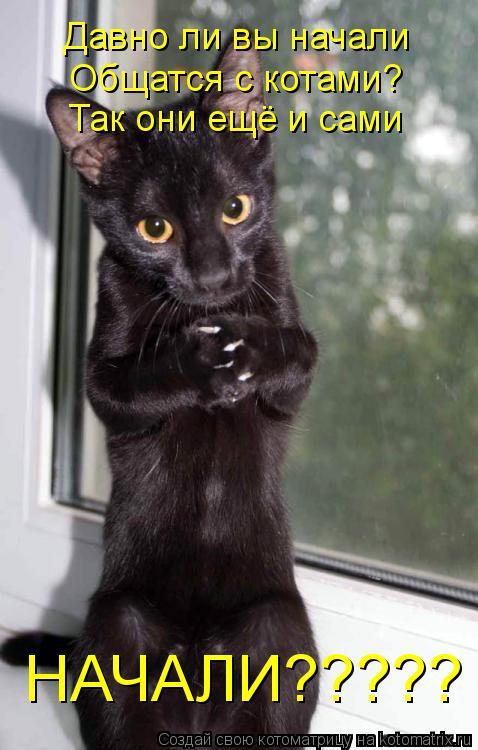 Котоматрица: Давно ли вы начали  Общатся с котами? Так они ещё и сами  НАЧАЛИ?????