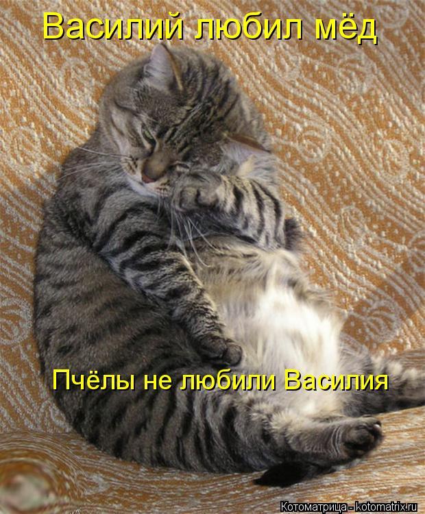Котоматрица: Василий любил мёд Пчёлы не любили Василия