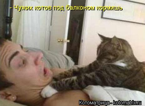 Котоматрица: - Чужих котов под балконом кормишь