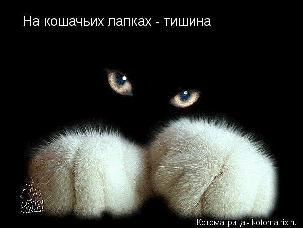 Котоматрица: На кошачьих лапках - тишина На кошачьих лапках - тишина