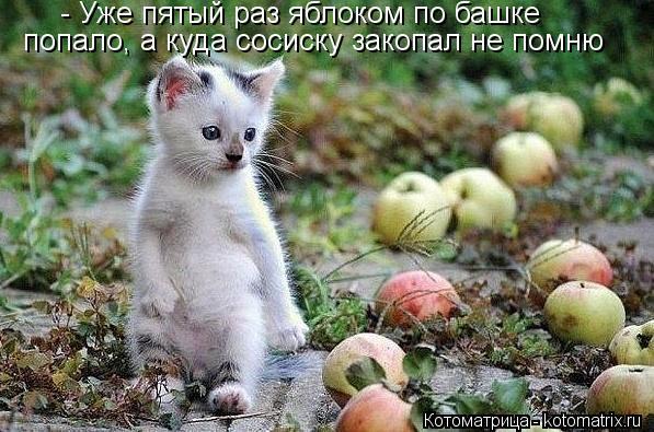 Котоматрица: - Уже пятый раз яблоком по башке попало, а куда сосиску закопал не помню