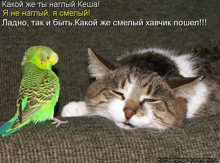 Котоматрица: Какой же ты наглый Кеша! Я не наглый, я смелый! Ладно, так и быть.Какой же смелый хавчик пошел!!!
