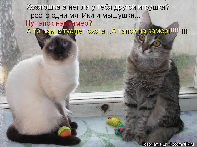 Котоматрица: Хозяюшка,а нет ли у тебя другой игрушки? Хозяюшка,а нет ли у тебя другой игрушки? Просто одни мячИки и мышушки... Ну,тапок например? А то нам в