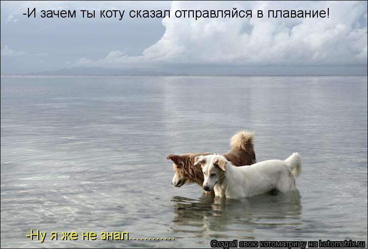 Котоматрица: -И зачем ты коту сказал отправляйся в плавание! -Ну я же не знал............