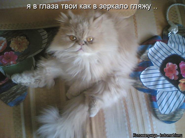 Котоматрица: я в глаза твои как в зеркало гляжу ..