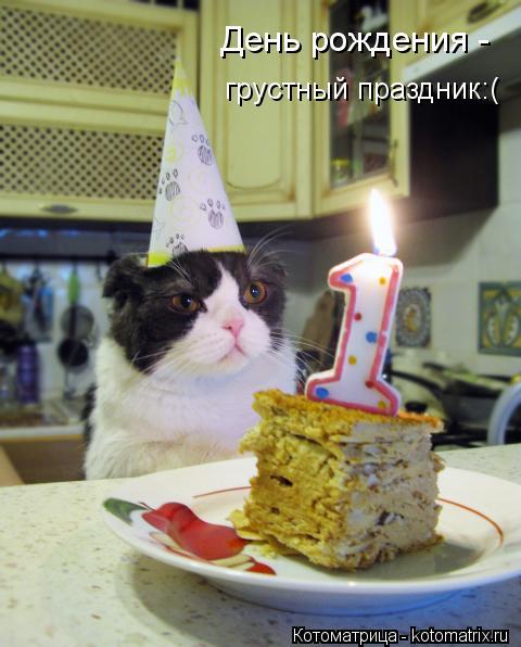 Котоматрица: День рождения - грустный праздник:(