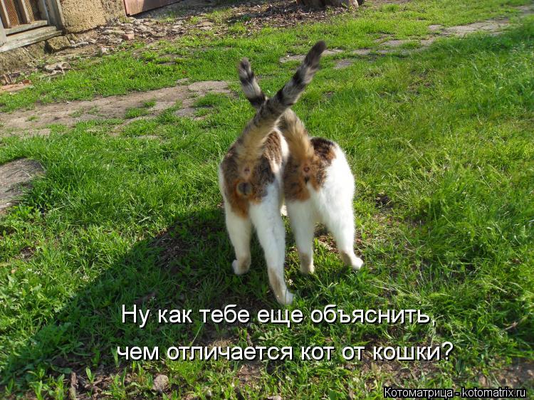Котоматрица: Ну как тебе еще объяснить, чем отличается кот от кошки?
