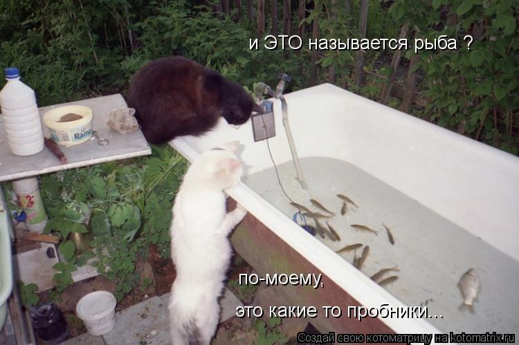 Котоматрица: и ЭТО называется рыба ? по-моему,  это какие то пробники...