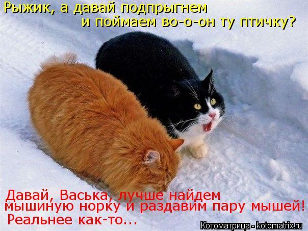 Котоматрица: Рыжик, а давай подпрыгнем  и поймаем во-о-он ту птичку? Реальнее как-то... Давай, Васька, лучше найдем  мышиную норку и раздавим пару мышей!