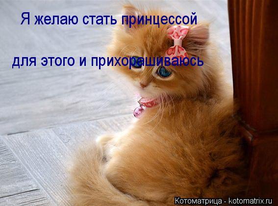 Котоматрица: Я желаю стать принцессой для этого и прихорашиваюсь