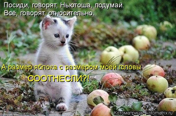 Котоматрица: Посиди, говорят, Ньютоша, подумай.  Всё, говорят, относительно. А размер яблока с размером моей головы  СООТНЕСЛИ?!
