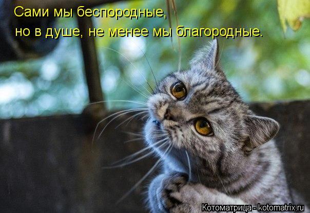 Котоматрица: Сами мы беспородные,  но в душе, не менее мы благородные.