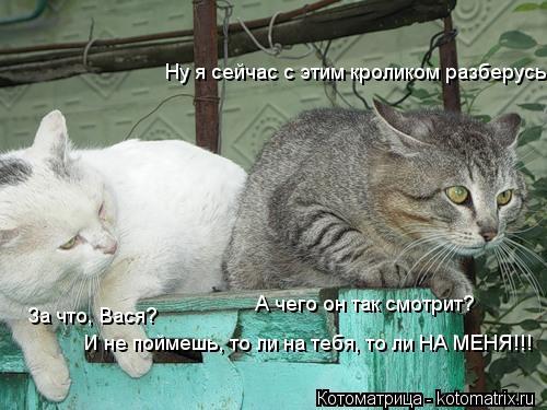 Котоматрица: Ну я сейчас с этим кроликом разберусь За что, Вася? А чего он так смотрит?  И не поймешь, то ли на тебя, то ли НА МЕНЯ!!!