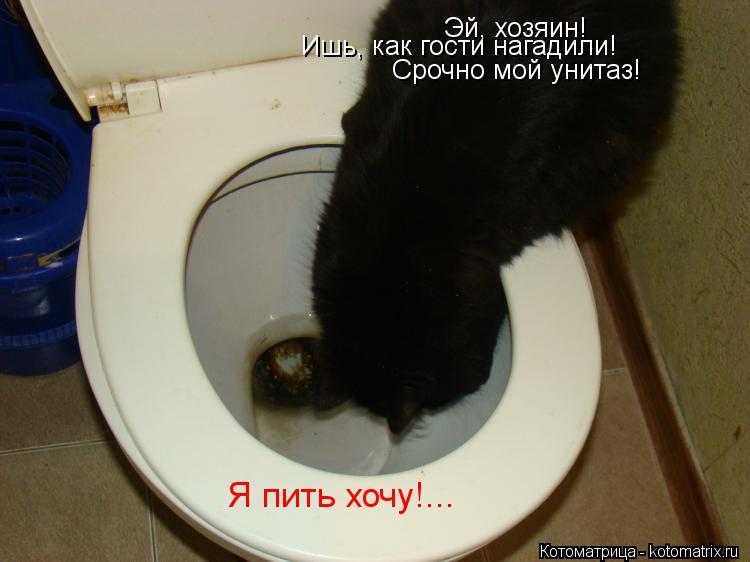 Котоматрица: Эй, хозяин! Срочно мой унитаз! Ишь, как гости нагадили! Я пить хочу!...