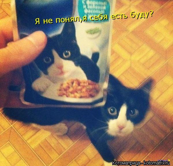Котоматрица: Я не понял,я себя есть буду?