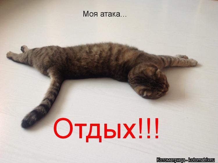 Котоматрица: Моя атака... Отдых!!!