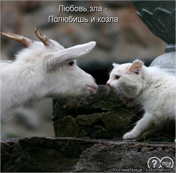 Котоматрица: Любовь,зла - Полюбишь и козла