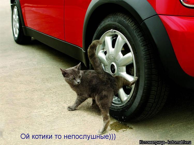 Котоматрица: Ой котики то непослушные)))