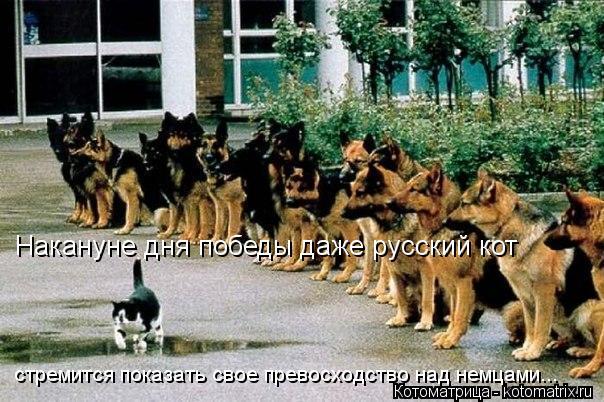 Котоматрица: Накануне дня победы даже русский кот  стремится показать свое превосходство над немцами...