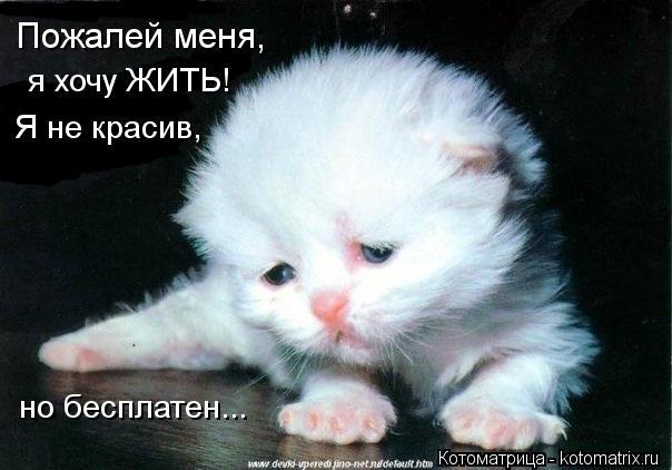 Котоматрица: Пожалей меня, я хочу ЖИТЬ! Я не красив, но бесплатен...