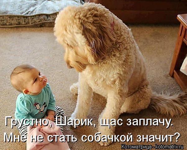 Котоматрица: Грустно, Шарик, щас заплачу. Мне не стать собачкой значит?