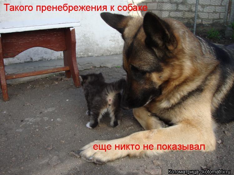 Котоматрица: Такого пренебрежения к собаке еще никто не показывал