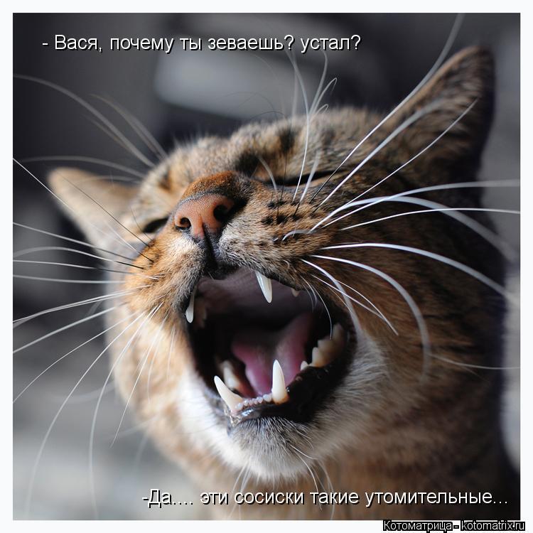 Котоматрица: - Вася, почему ты зеваешь? устал? -Да.... эти сосиски такие утомительные...