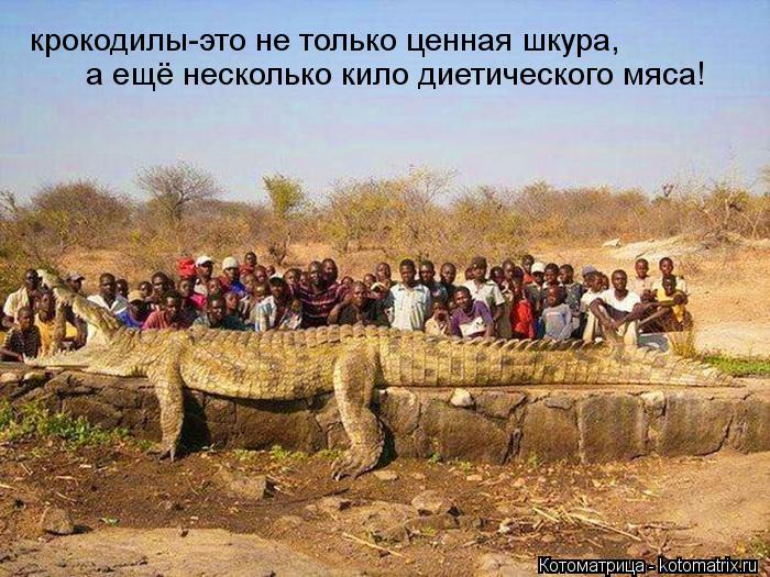 Котоматрица: крокодилы-это не только ценная шкура, а ещё несколько кило диетического мяса!