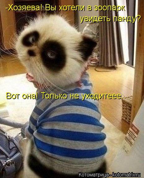 Котоматрица: -Хозяева! Вы хотели в зоопарк  увидеть панду? Вот она! Только не уходитеее..