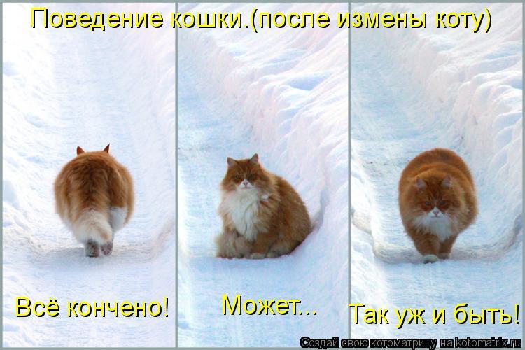 Котоматрица: Поведение кошки.(после измены коту) Всё кончено! Может... Так уж и быть!