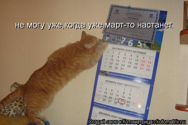Котоматрица: не могу уже,когда уже март-то настанет.