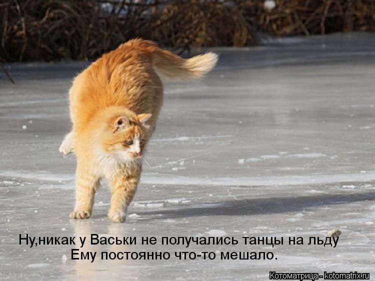 Котоматрица: Ну,никак у Васьки не получались танцы на льду Ему постоянно что-то мешало.