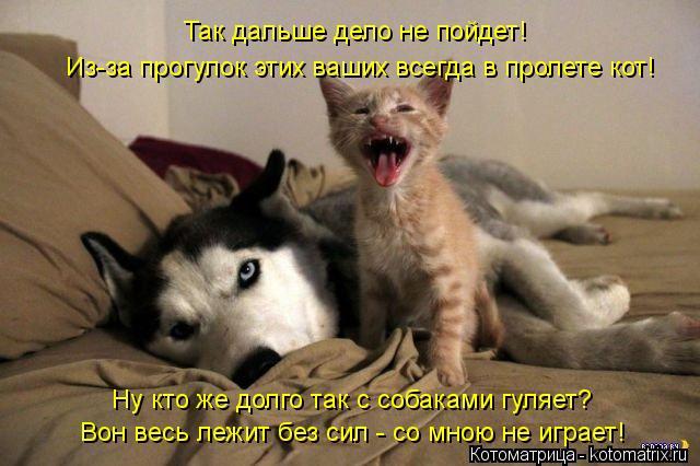 Котоматрица: Ну кто же долго так с собаками гуляет? Так дальше дело не пойдет! Из-за прогулок этих ваших всегда в пролете кот! Вон весь лежит без сил - со мн