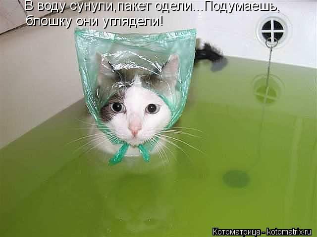 Котоматрица: В воду сунули,пакет одели...Подумаешь, блошку они углядели!