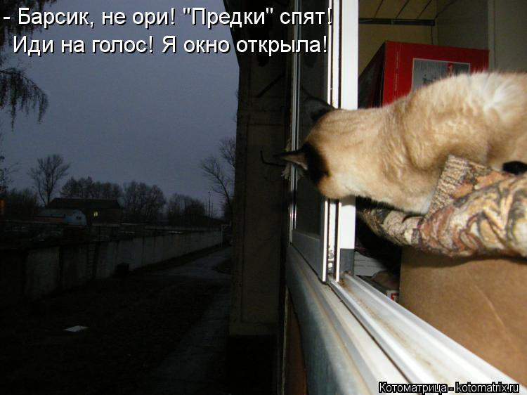 "Котоматрица: - Барсик, не ори! ""Предки"" спят! Иди на голос! Я окно открыла!"