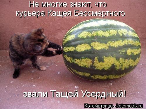 Котоматрица: Не многие знают, что  курьера Кащея Бессмертного звали Тащей Усердный!