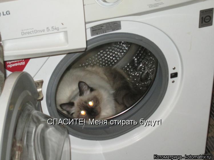 Котоматрица: СПАСИТЕ! Меня стирать будут!