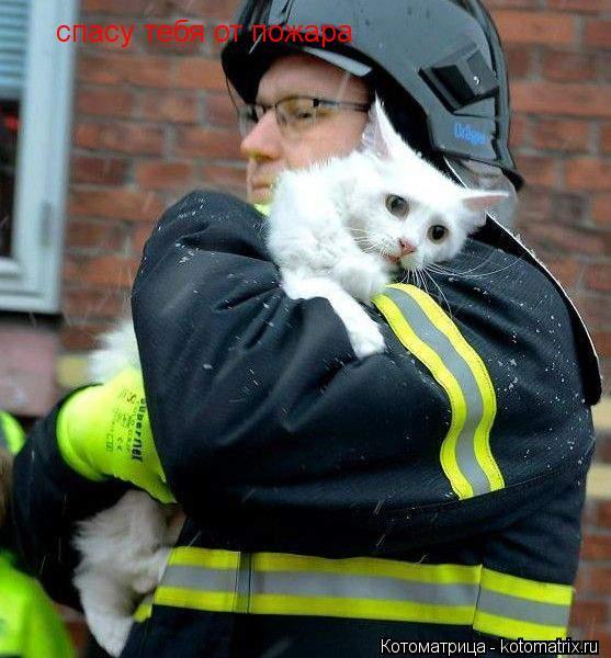 Котоматрица: спасу тебя от пожара