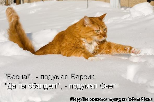 "Котоматрица: ""Весна!"", - подумал Барсик. ""Да ты обалдел!"", - подумал Снег"