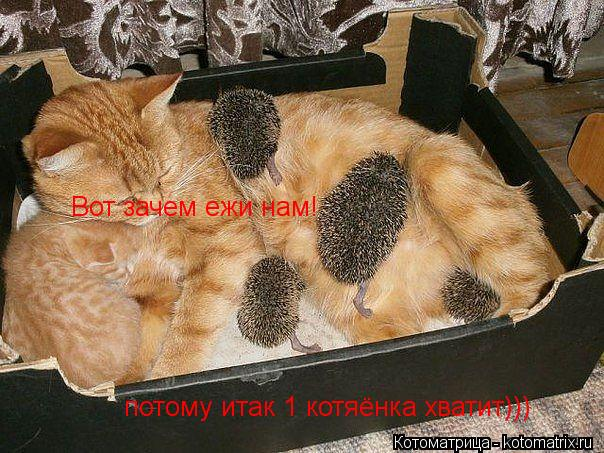 Котоматрица: Вот зачем ежи нам! потому итак 1 котяёнка хватит)))