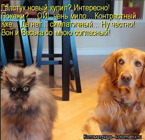 Котоматрица: Галстук новый купил? Интересно! Покажи? ...ОЙ!..чень мило... Контрастный... Кхе... Да нет... симпатичный... Ну честно! Вон и Васька со мною согласный!