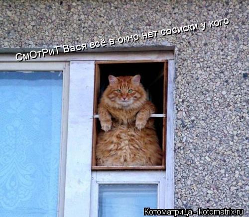 Котоматрица: СмОтРиТ Вася всё в окно нет сосиски у кого