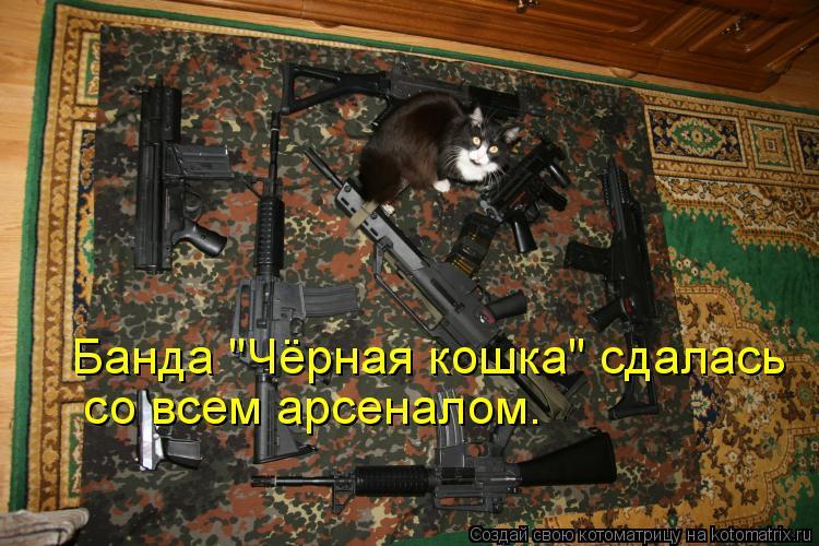 """Котоматрица: Банда """"Чёрная кошка"""" сдалась со всем арсеналом."""