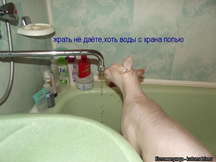 Котоматрица: жрать не даёте,хоть воды с крана попью