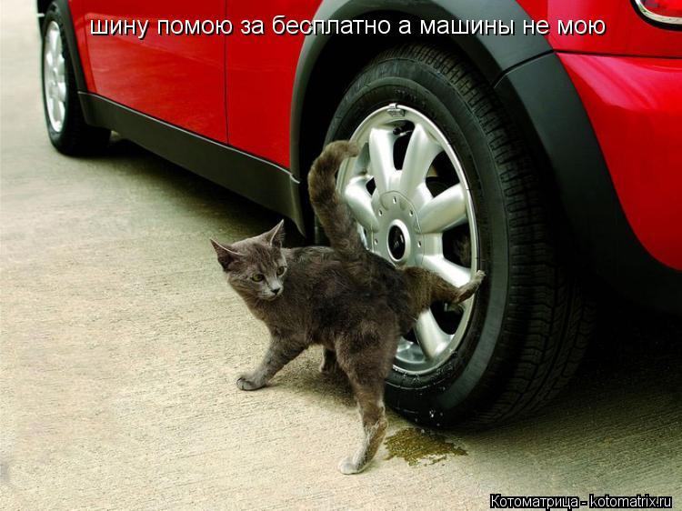 Котоматрица: шину помою за бесплатно а машины не мою