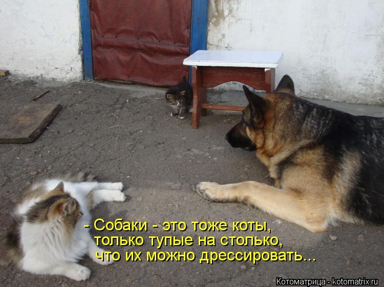 Котоматрица: - Собаки - это тоже коты, только тупые на столько, что их можно дрессировать...